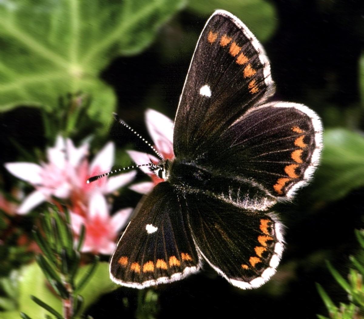 rare-animals-top-10-rarest-butterflies-in-the-world