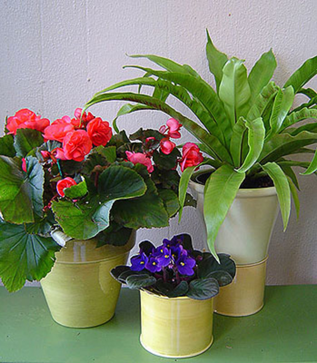 Plants and flowers improve the positive chi in your home