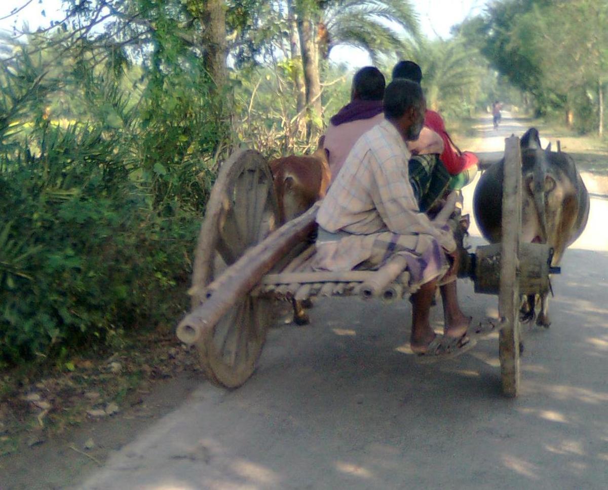 Man using Bullock Carts