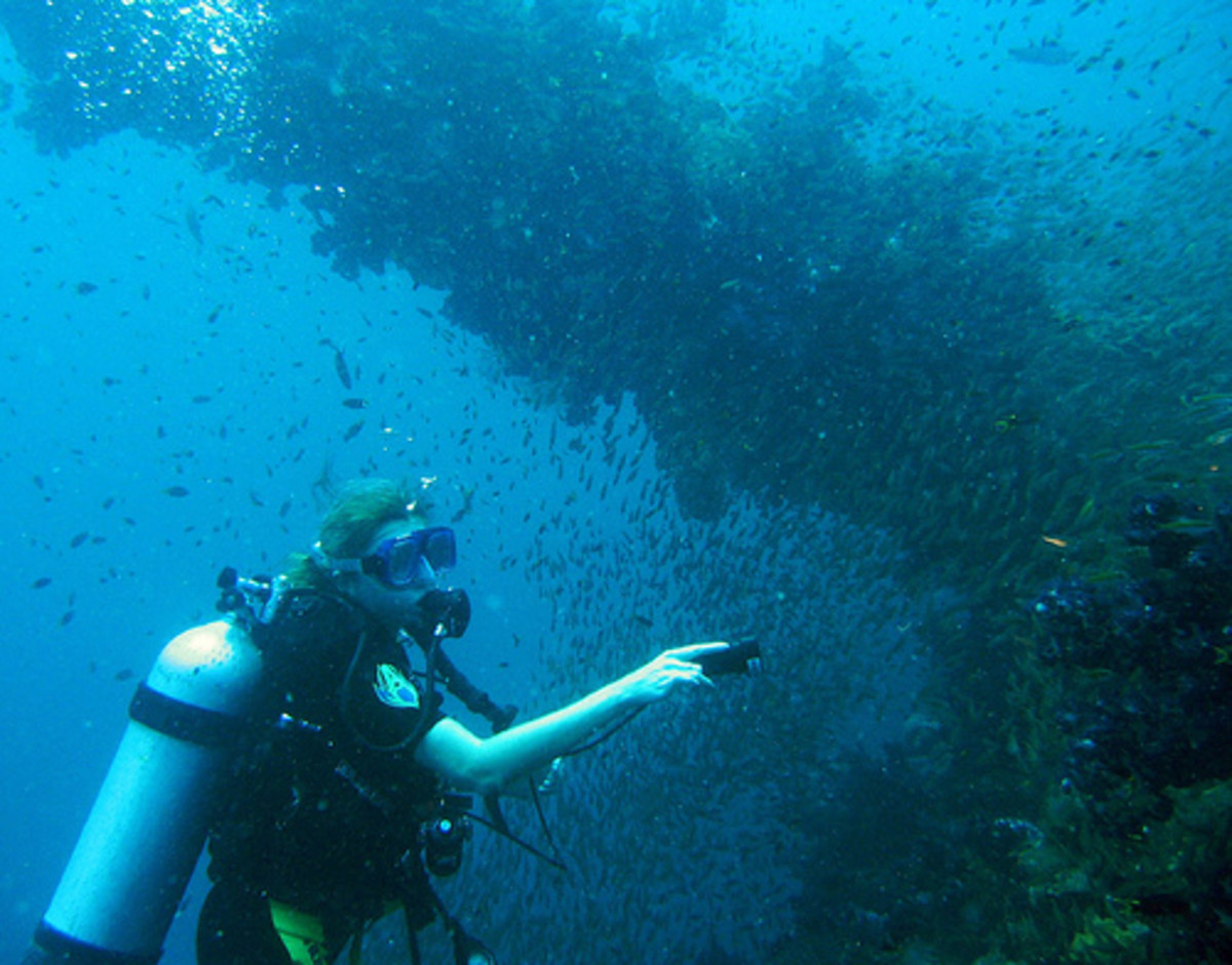 The S.S Yongala wreck is used as a popular diving area.