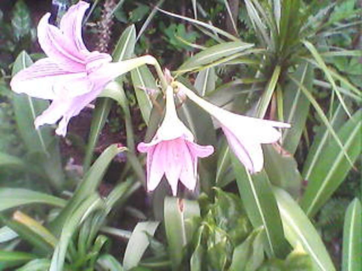 An accent in my green garden