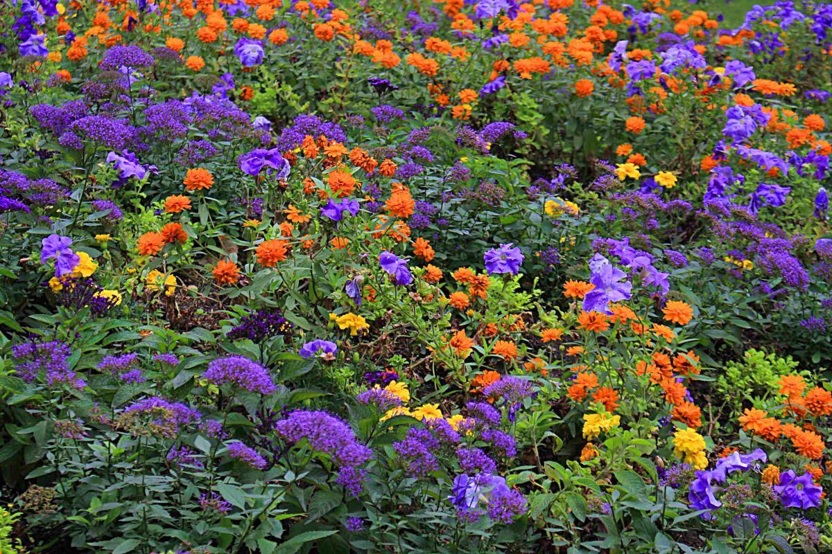 The flowers of Jardin du Luxembourg