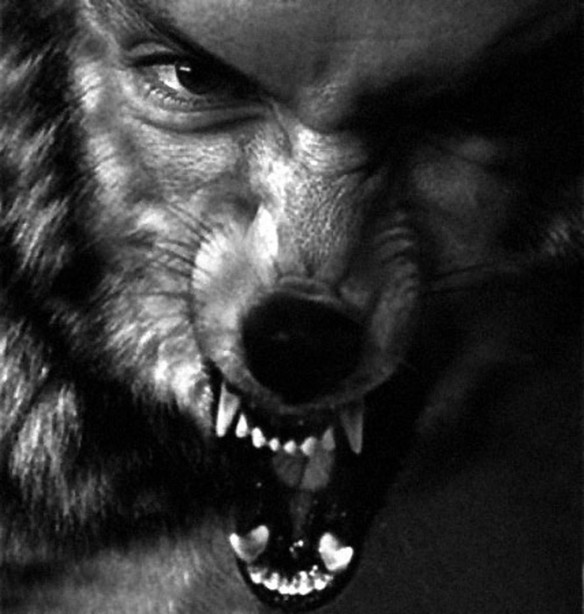Half Human Half Wolf Male Aswang are shape shifters