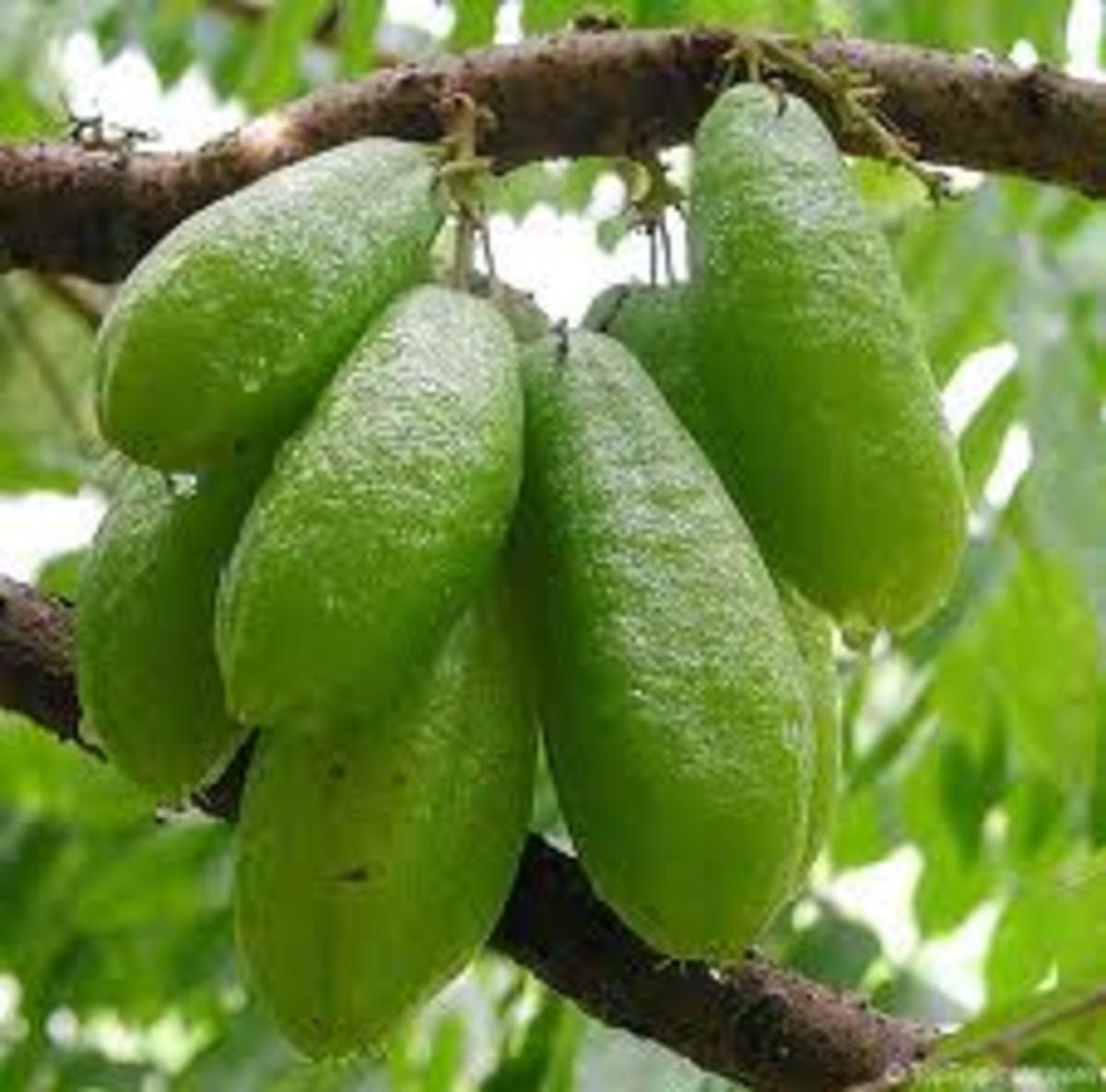 Kamias or bilimbi is used in sinigang.