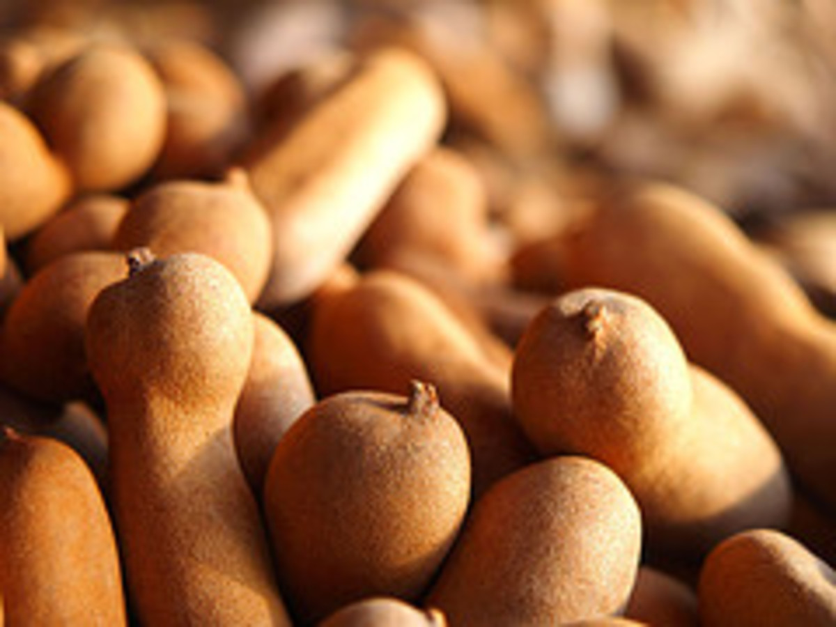 Tamarind (Photo courtesy by AraiGodai from Flickr)