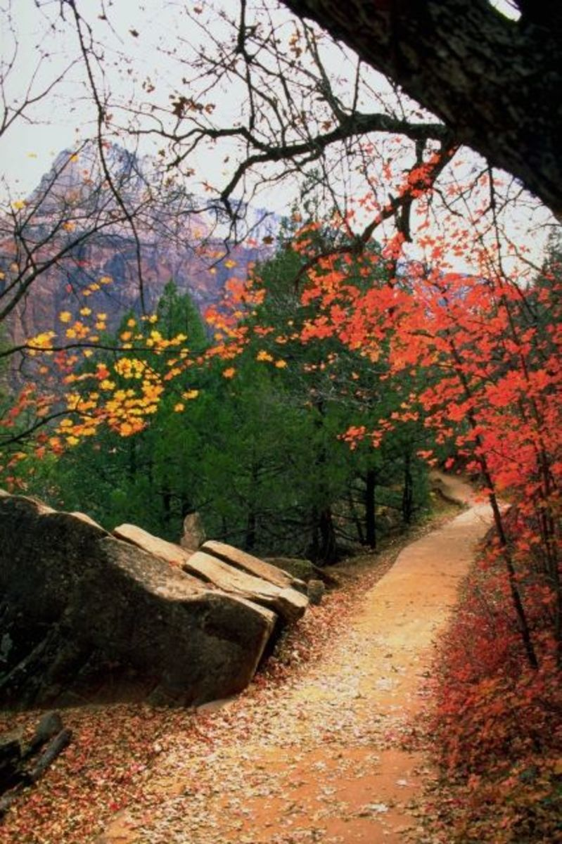 A Road Through the Poetry of Robert Frost