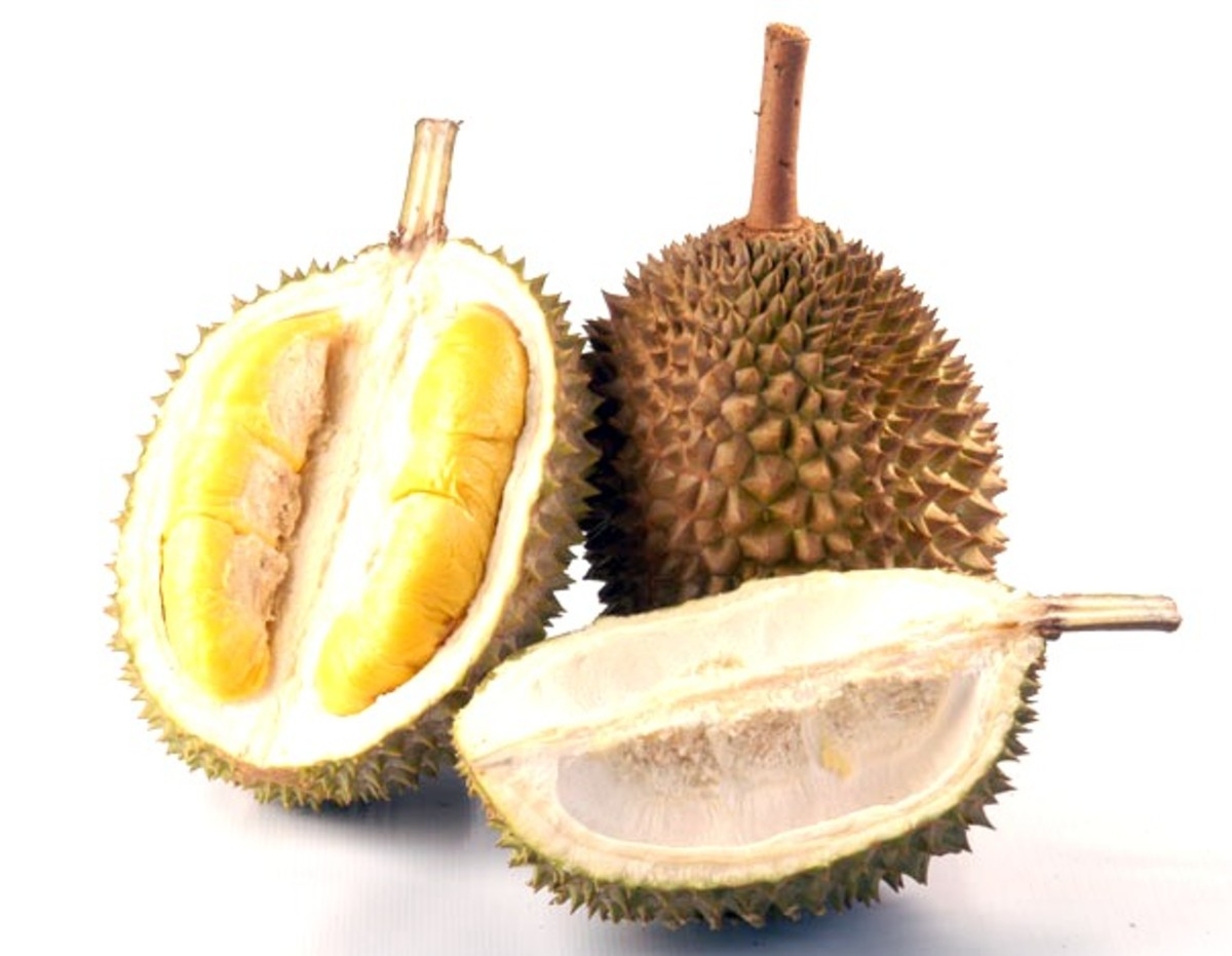 Durian, a fruit that tastes better than it smells