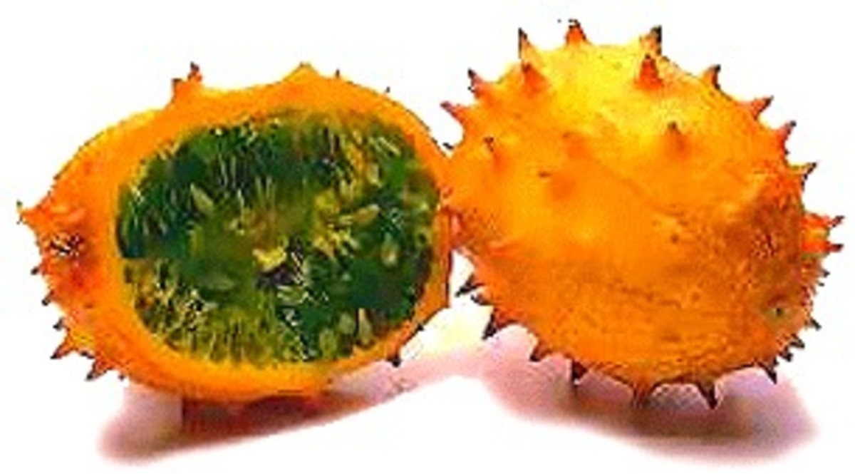 Kiwano, one of the oldest melon species