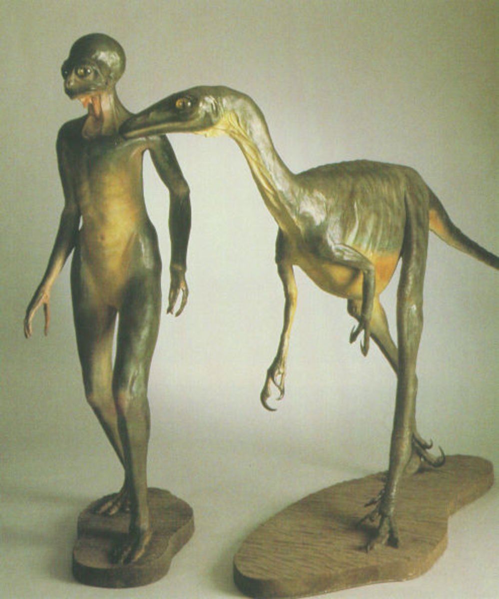 "Dale Russell's ""Dinosauroid"" with it's ancestor the Troodon."