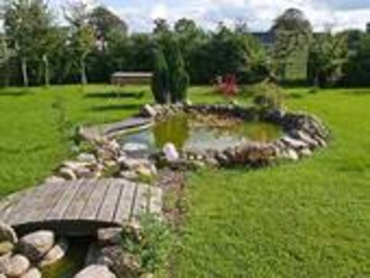 A Fish Pond In Your Back Yard: A How To Guide To Backyard ...