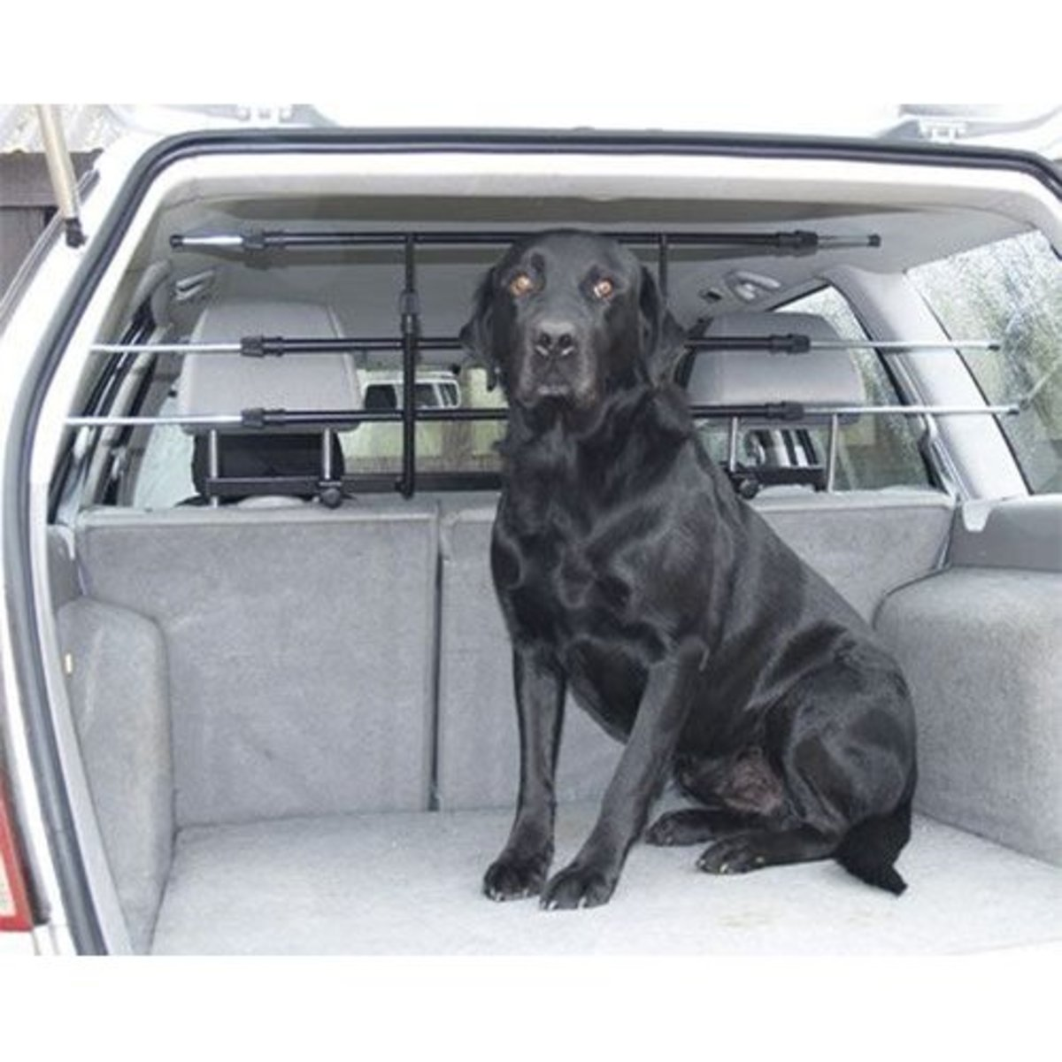 Dog Guards for Cars:  How to Find the Best Dog Car Barrier for Your Needs
