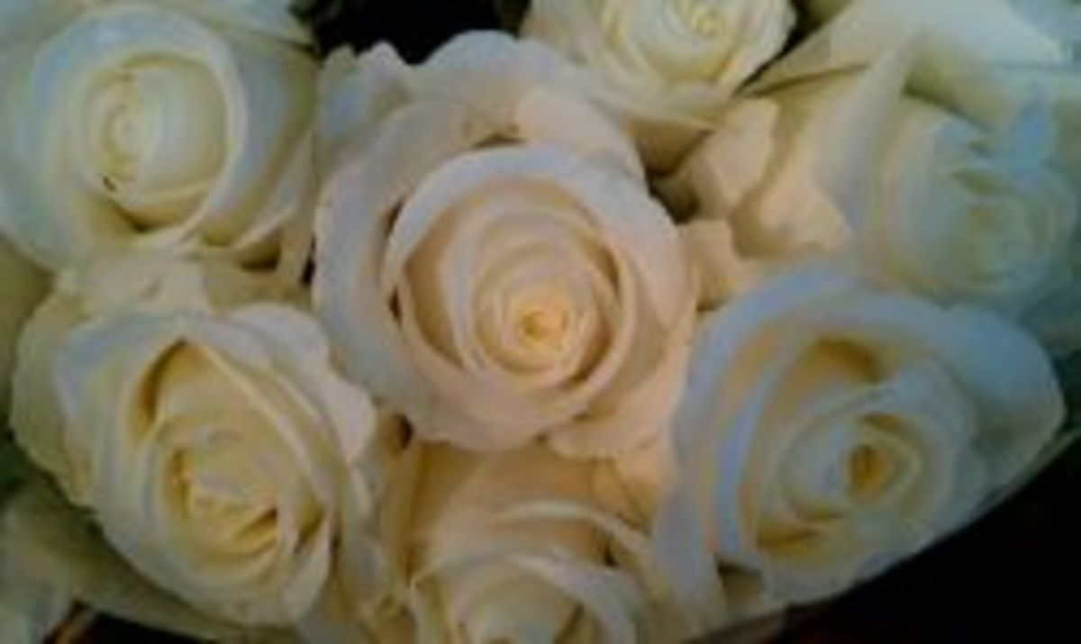 White Roses photo by Janienne Jennrich