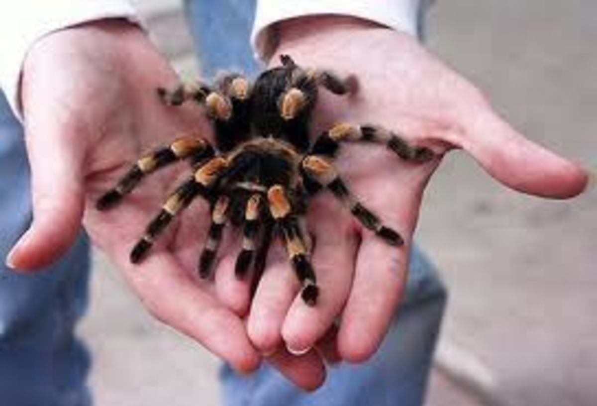 posionous-venomous-snakes-and-spiders-in-italy-encountered-whilst-on-holidays-or-vacations