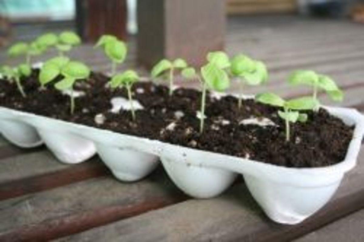 growing-herbs2