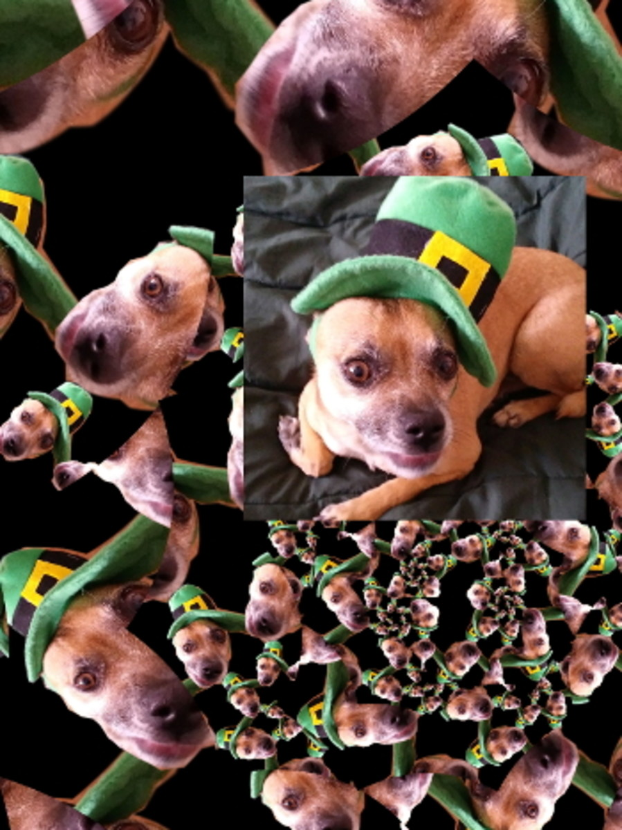 Happy St. Patty's Day Dog in a Hat. Continuous Droste effect on GIMP (2x) with original layered. Chuggers is a cute little dog.