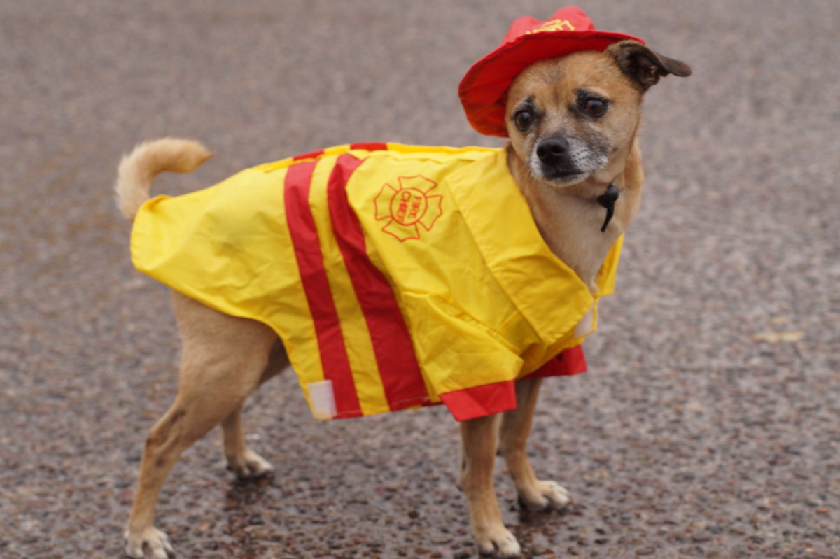 Fire Chief Raincoat for Chuggers in the rain.