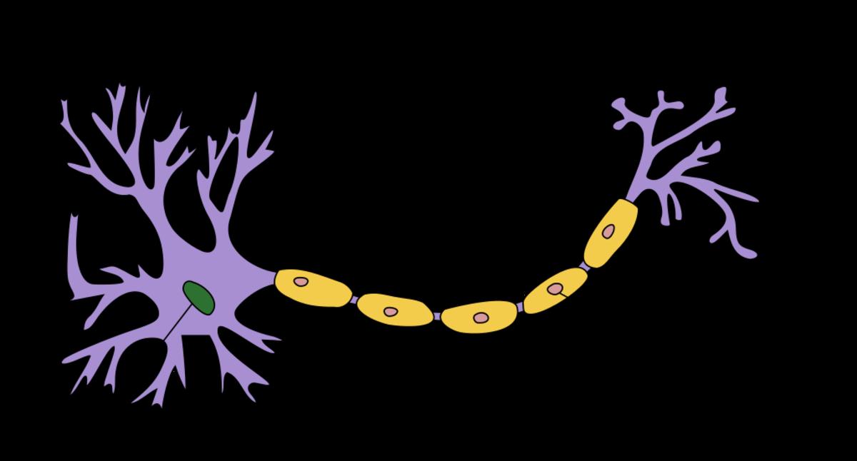 """""""Neuron Hand-tuned"""" by Quasar Jarosz"""