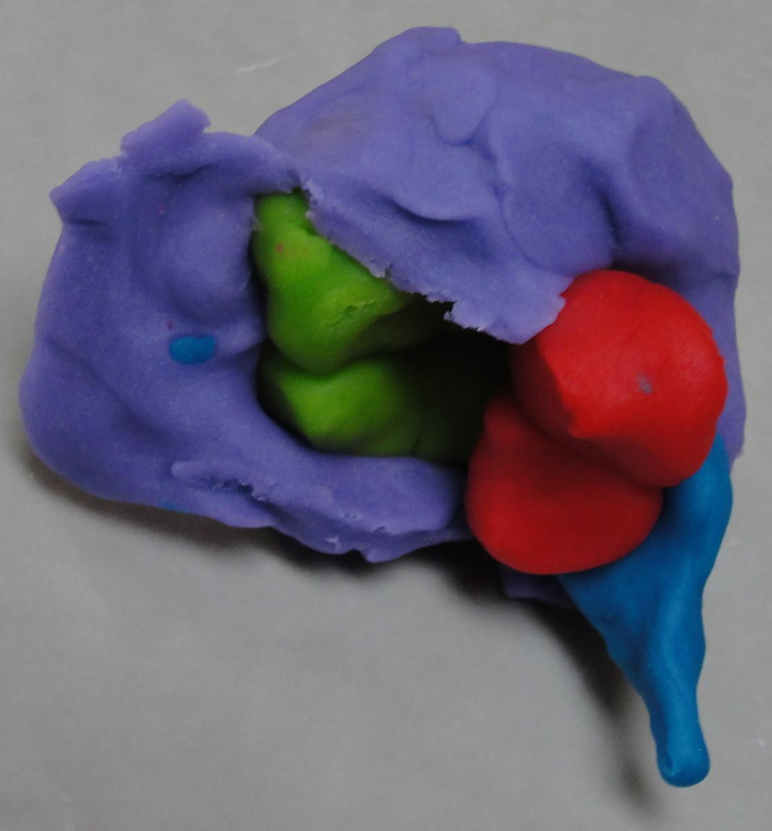 Adding the cerebral cortex