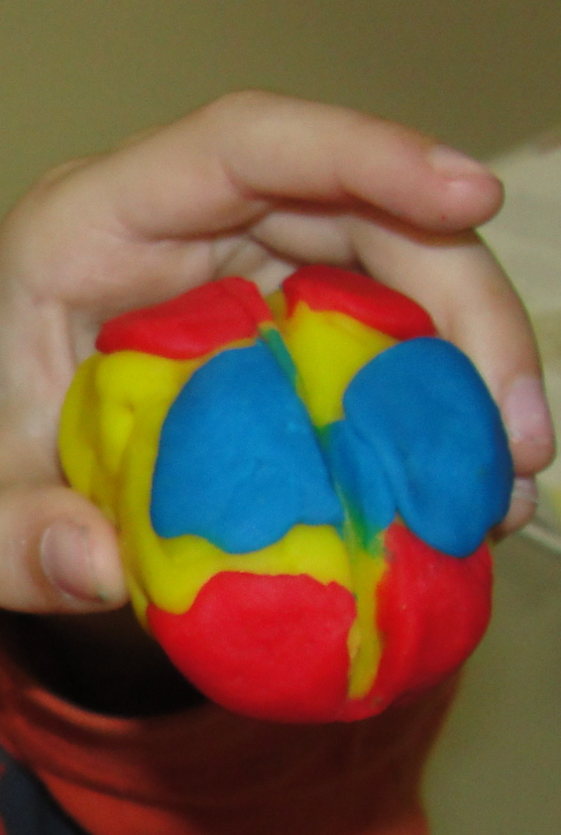 Play-doh model of the 4 lobes of the brain
