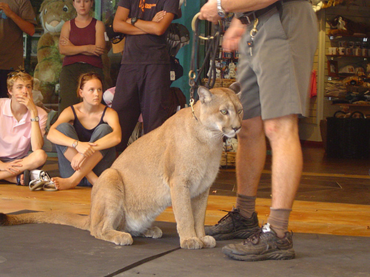 Larry's Tips for Hiking Safety in Cougar Country