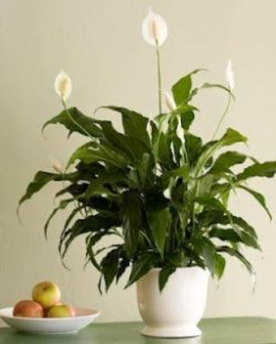 easy indoor plant