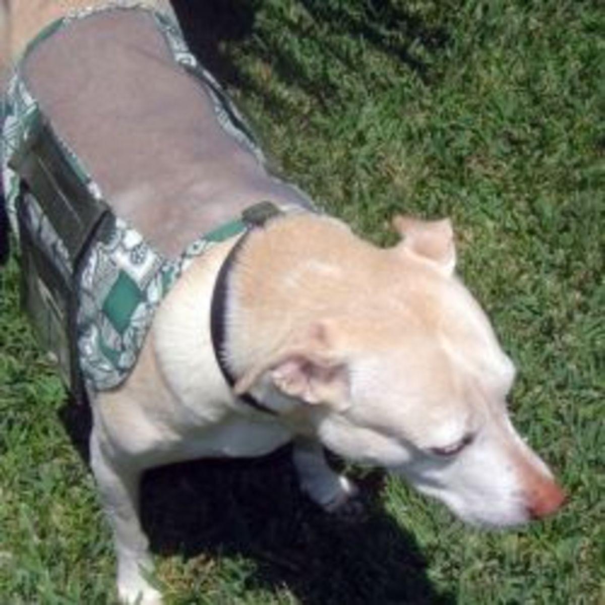 ADOPT ME Dog Vest Pattern
