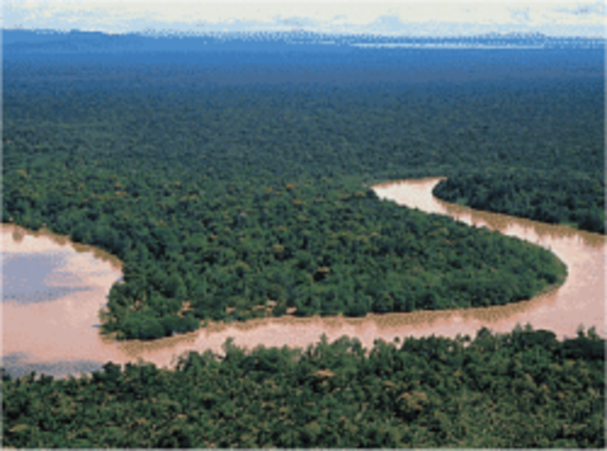 Cultural Adaptation: Human Adaptability in Tropical Rainforests