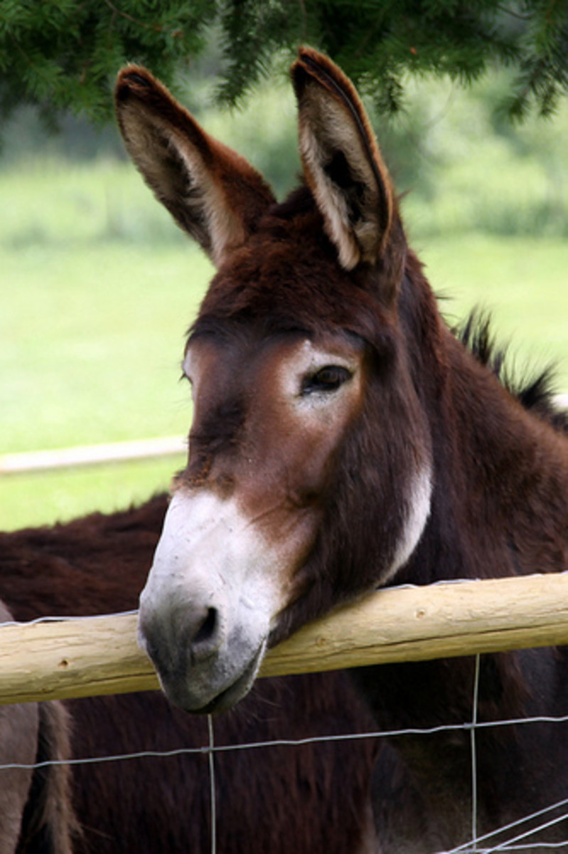 a-true-story-of-friendship-and-love-of-a-donkey-and-horse