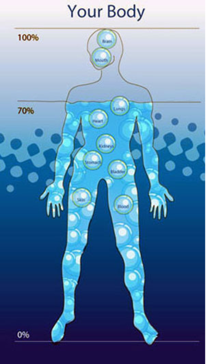 water in the human body