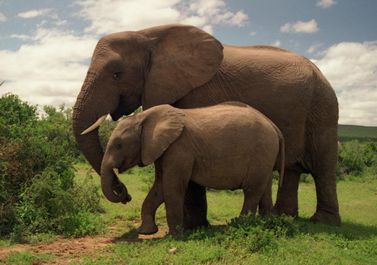 David Sheldrick Elephant and Rhino Orphanage
