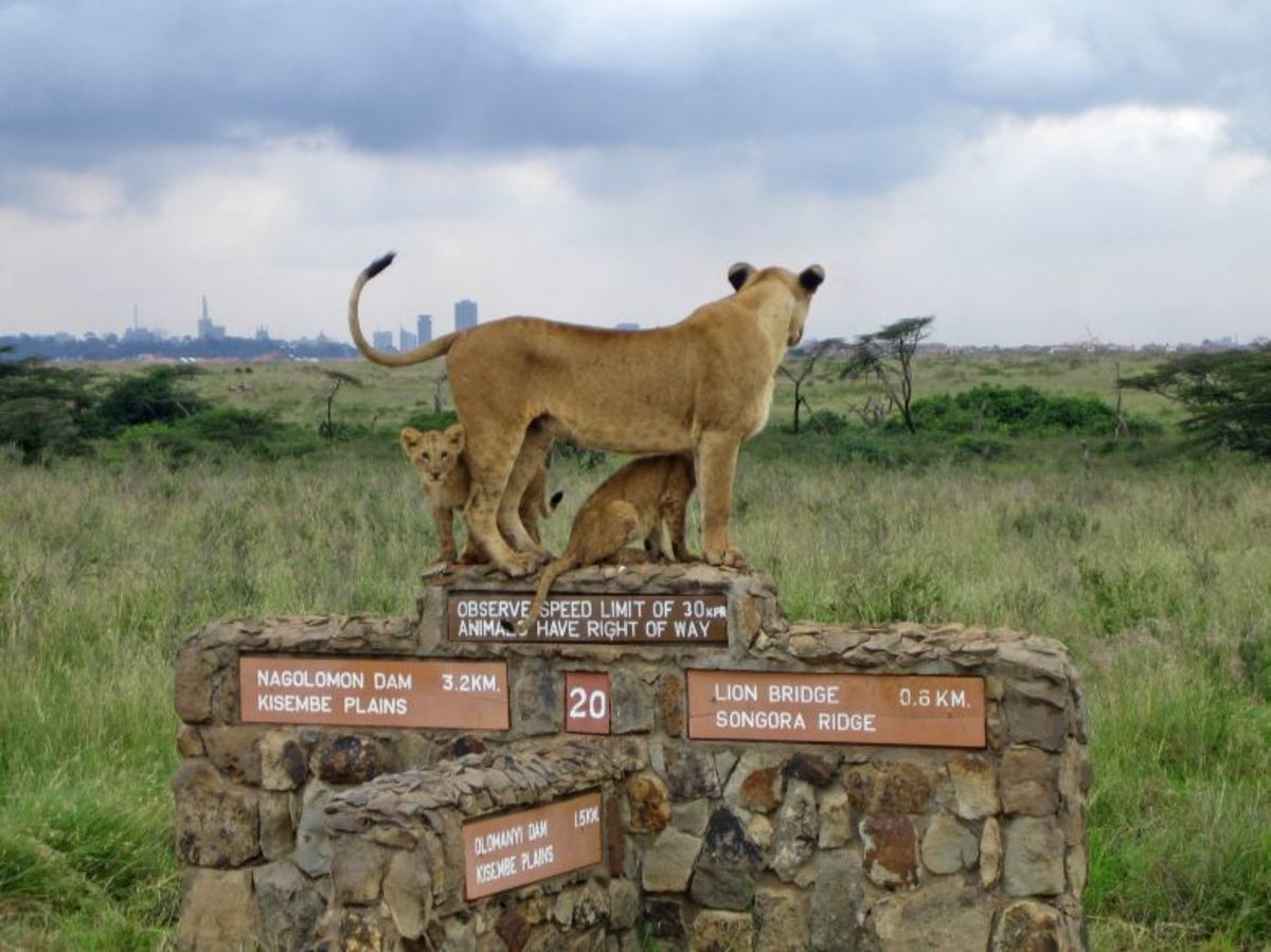 Nairobi National Park, Kenya