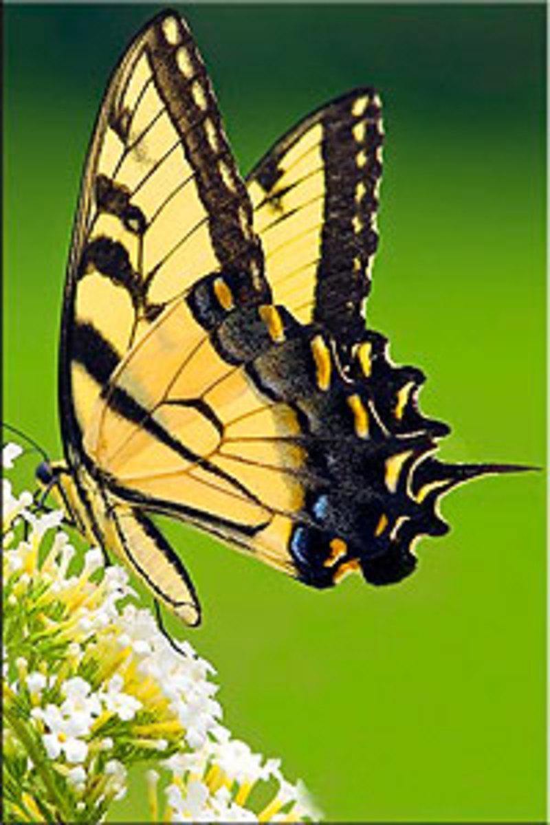 Nairobi Butterfly Centre, Kenya