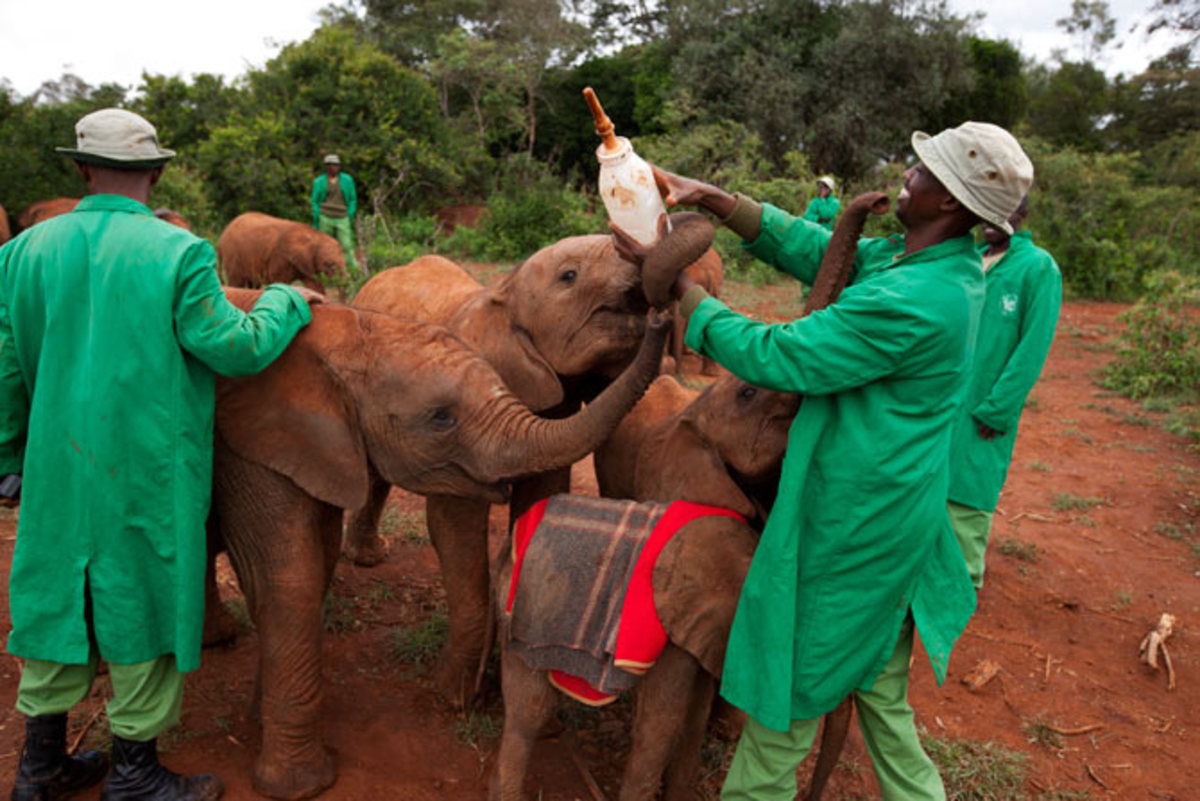 David Sheldrick Elephant and Rhino Orphanage