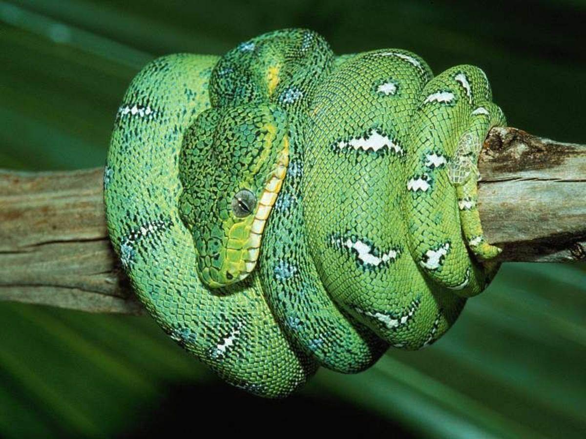Nairobi Snake Park, Kenya