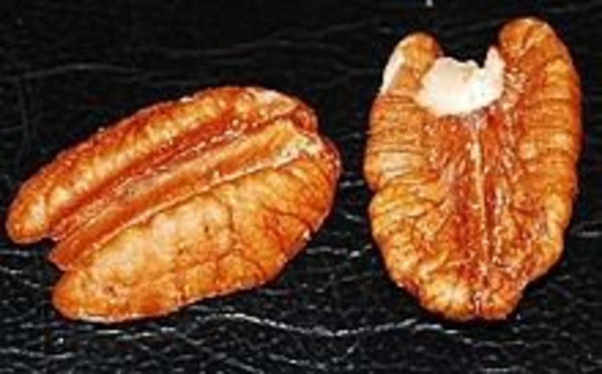 Pecans from Mississippi