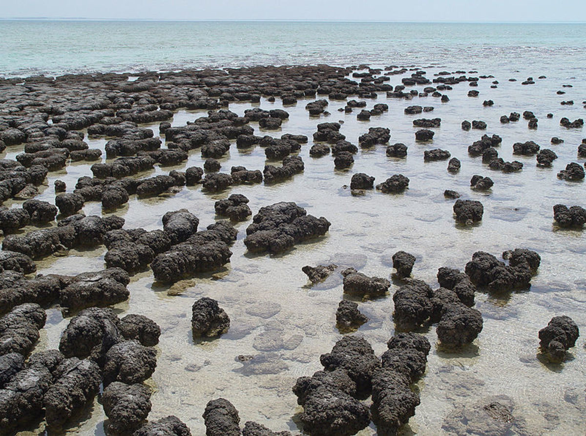 More than 3 billion years ago- cyanobacteria evolved a stunning new way of extracting energy from the sun called photosynthesis. They soon formed vast mats on the sea floor called stromatolites.