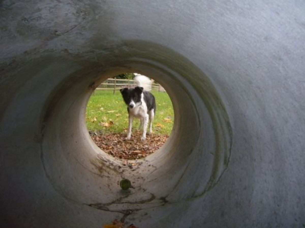 A Large Concrete Culvert Pipe at the Mukilteo Dog Park