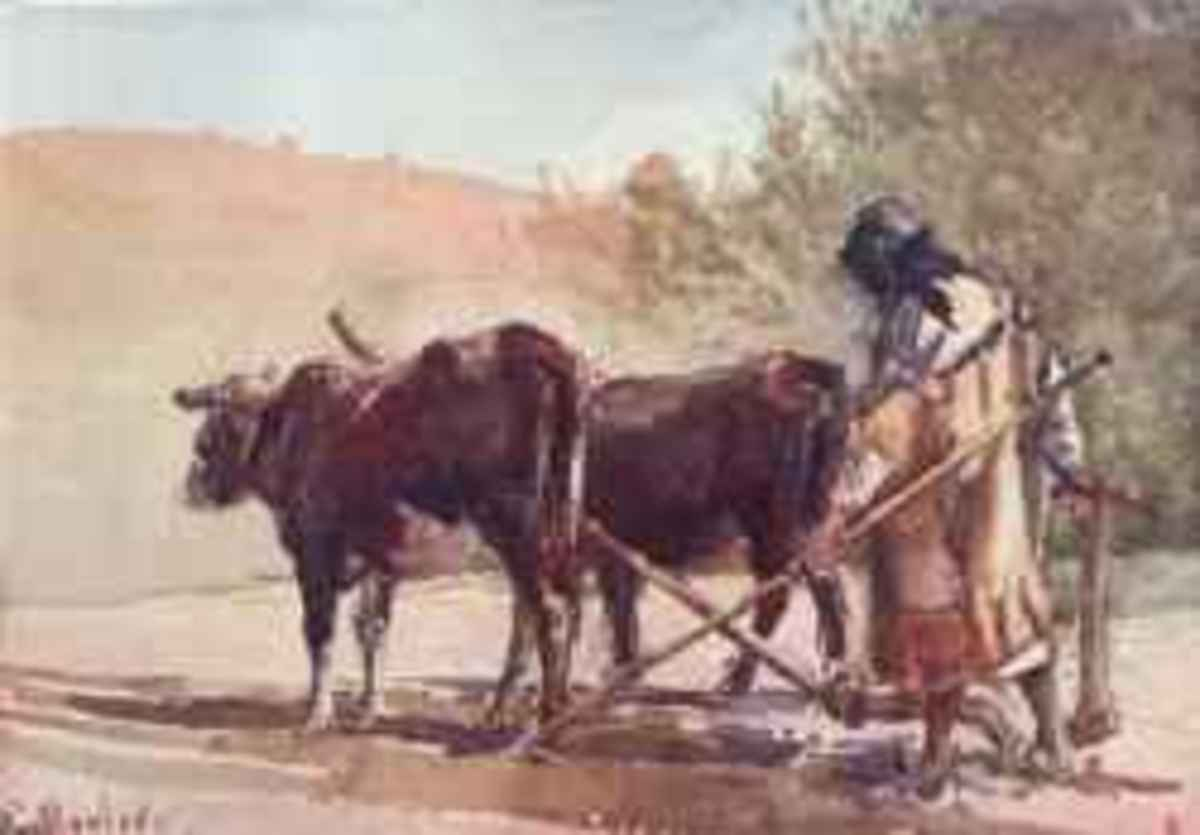 Plowing on the Mount of Olives