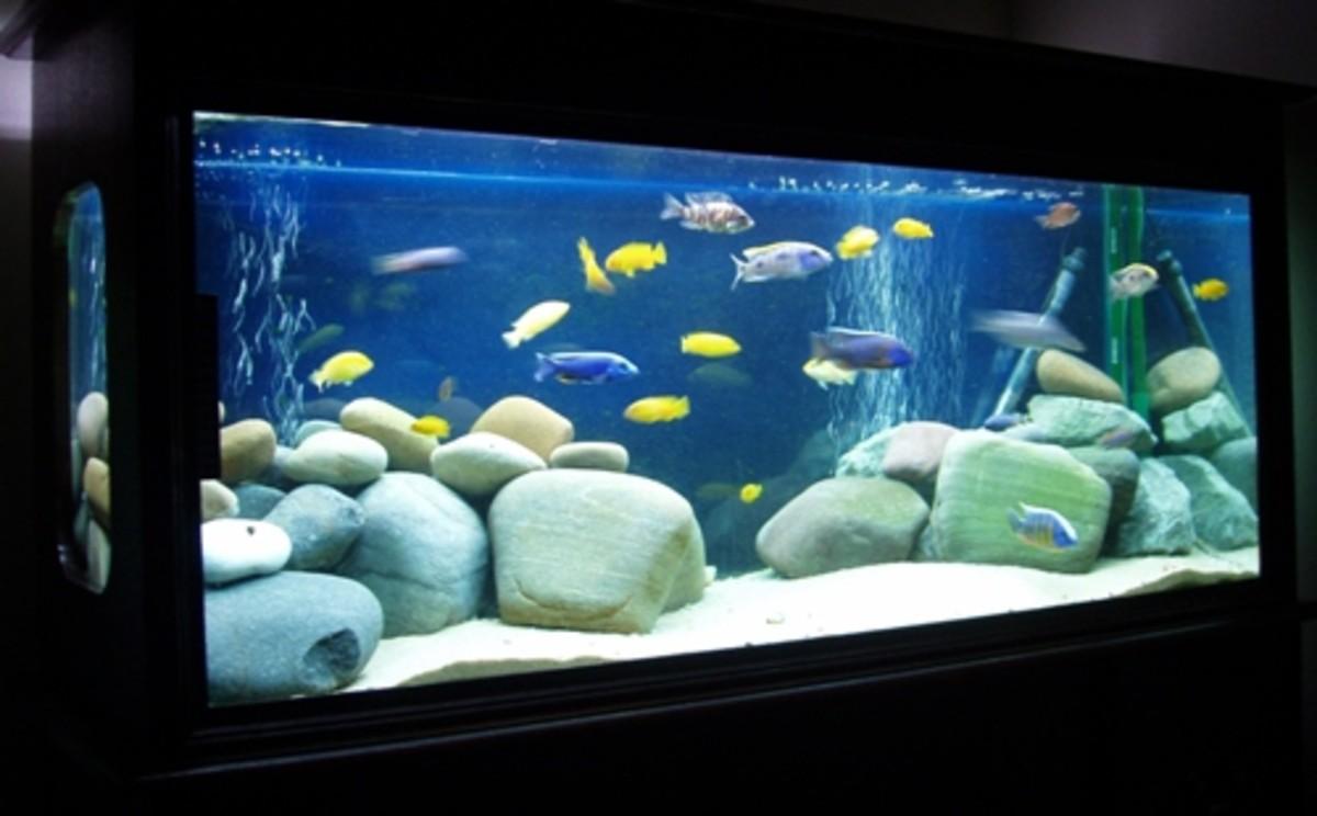 Rocks in a tank
