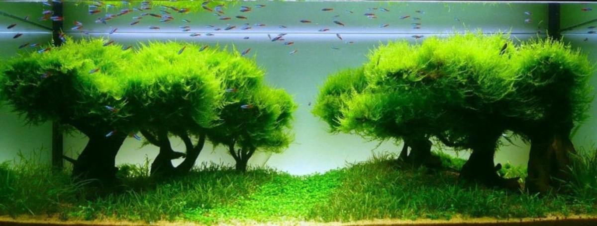 Beautiful Aquatic Plants and Pebbles for Your Fish Tank/Pond (Aquarium Accessories)