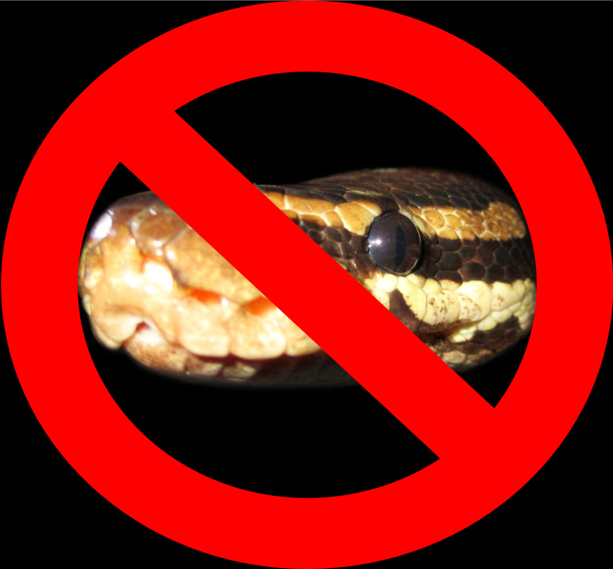 Should we struggle to pass legislation to outlaw the ownership of pythons as punishment for the misdeeds of a few irresponsible people? Should accidents such as this take priority over the thousands of python owners whose pets would never harm a fly?