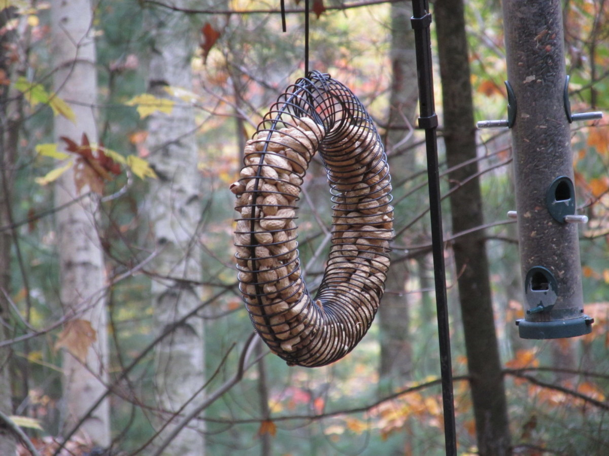 Peanut Feeder Wreath