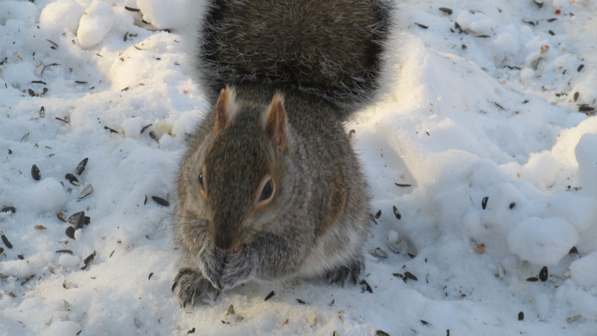 This little guy I like to call Persistent Q. Squirrel.