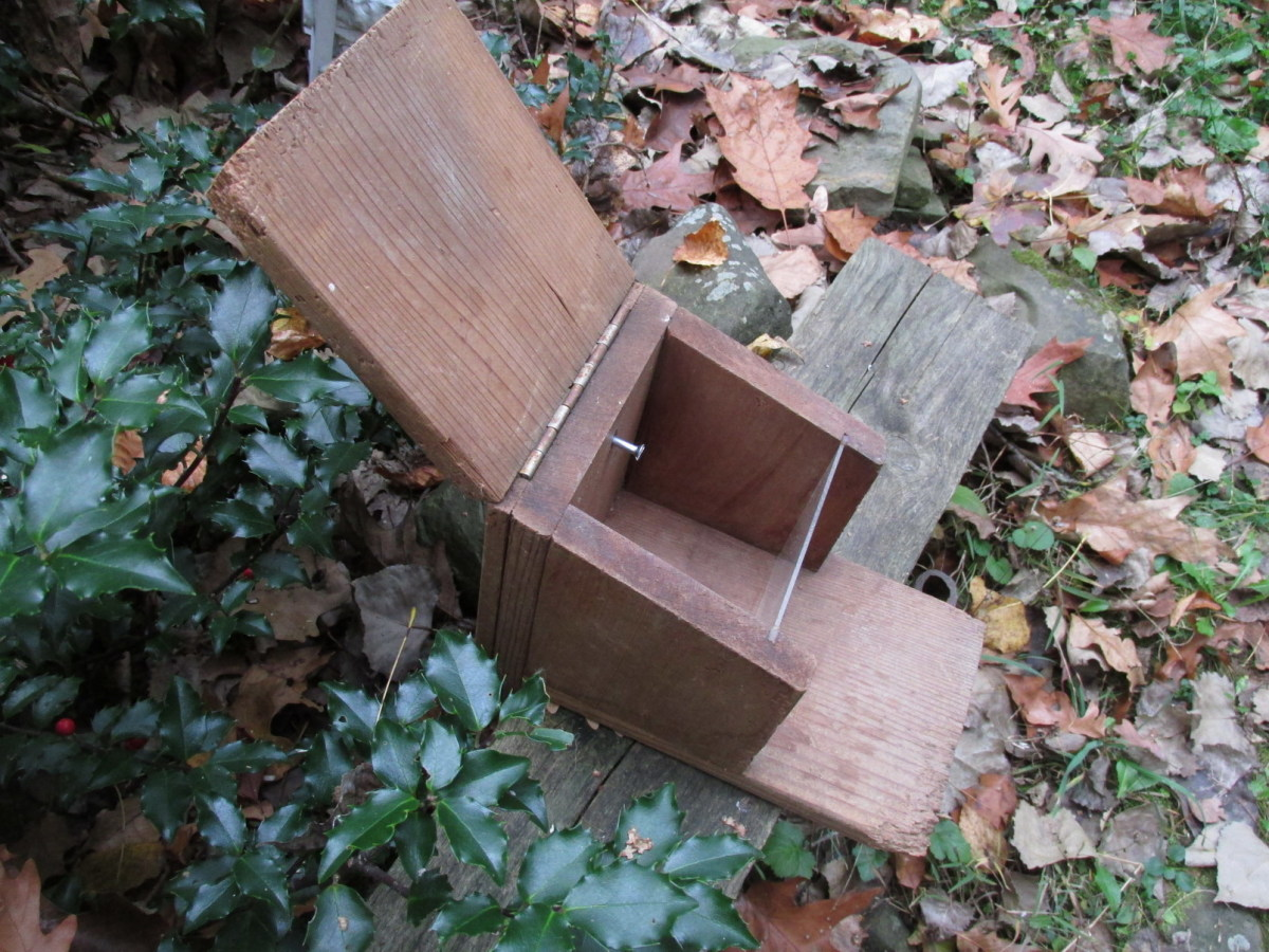 Nut box for squirrels