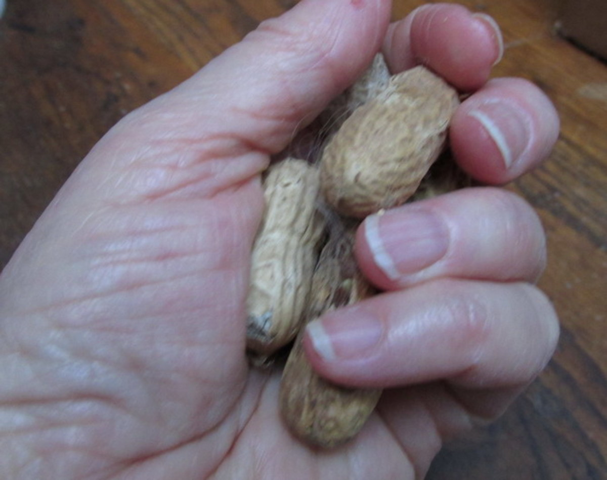 I sometimes crack the nut shells for my birds, just to help them access the nuts faster.