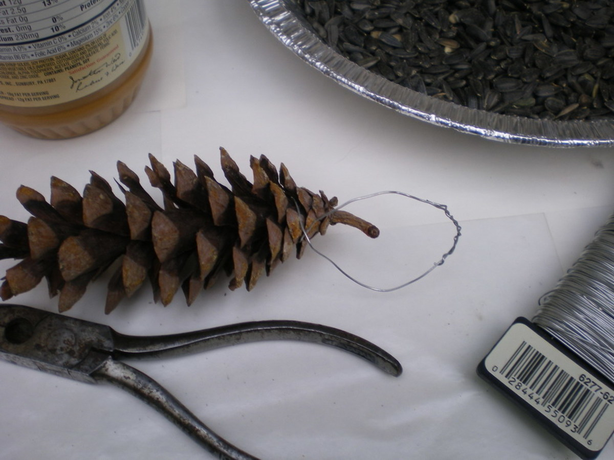 Wrap wire around top scales of pine cone and secure a hanging loop by twisting wire ends together.