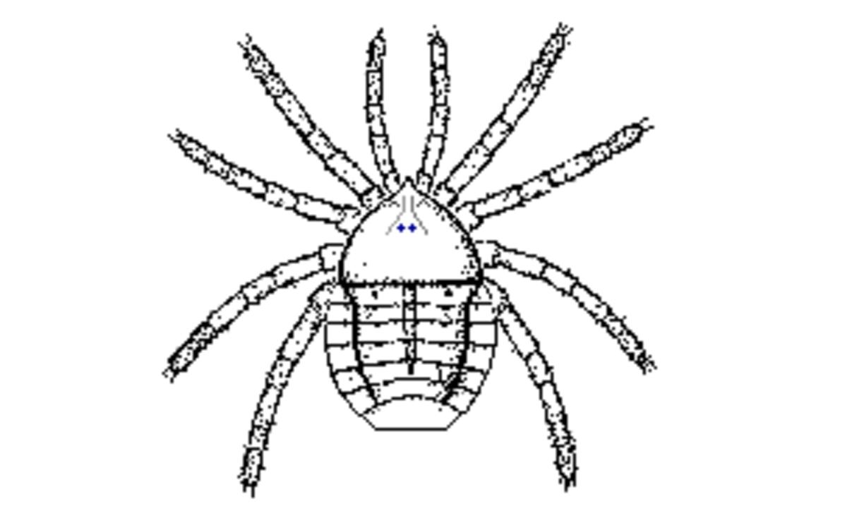 Trigonotarbid Palaeotarbus Jerami, the oldest arachnid.