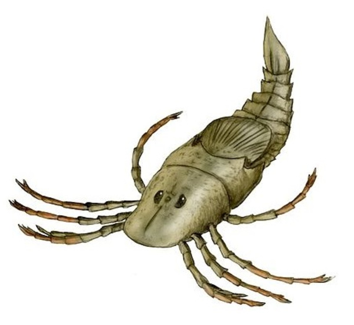 Megarachne was believed to be a giant spider but it was actually a sea scorpion.