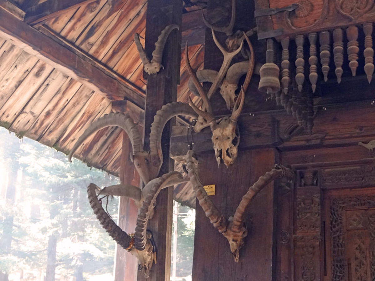 A wall of the Hidamba Devi Temple with hanging skulls of sacrificed buffaloes since  ancient times, and the folklore even says that these are of the pre-historic time since the days of Hidamba Devi herself.