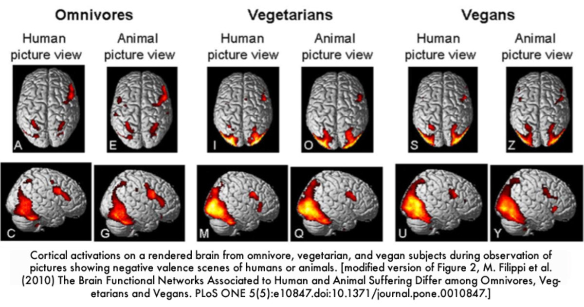 According to farmsanctuary.org, FMRI brain scans showed that areas associated with the empathy are more active in vegetarians and vegans than in omnivores.